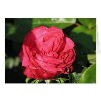 失敗の全米の美しいの雑種の茶バラ097 カード
