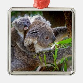 奥地にかわいいコアラの運命の自然Aussi メタルオーナメント