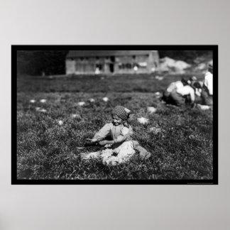 女の子の盗品のクランベリーはロチェスター、MA 1910年に近づきます ポスター
