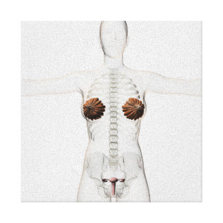 女性の生殖システムの3D眺め キャンバスプリント