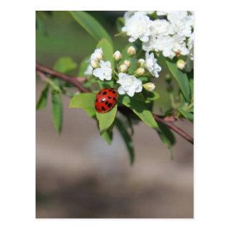 女性Bugおよび白い花 ポストカード