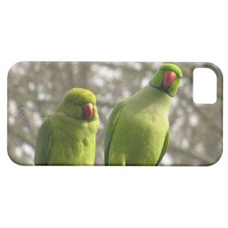好奇心が強いインコとのiPhone 5の場合 iPhone SE/5/5s ケース