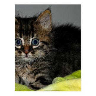 好奇心が強い猫 ポストカード