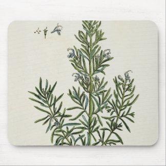 「好奇心が強い草」からのRosmarinus Officinalis、1 マウスパッド