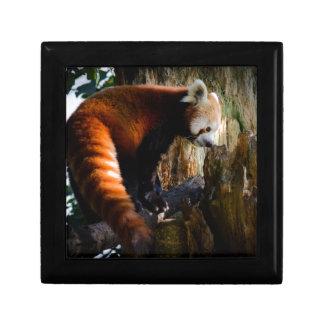好奇心にあふれるレッサーパンダ ギフトボックス