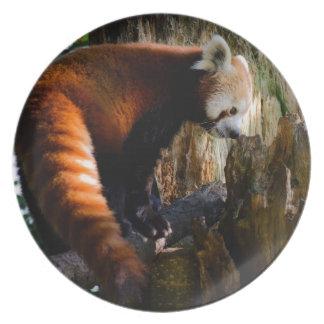 好奇心にあふれるレッサーパンダ プレート
