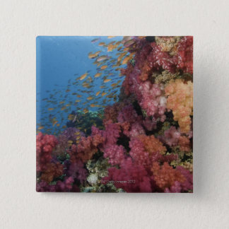 妖精のBasslets 2の教育 5.1cm 正方形バッジ