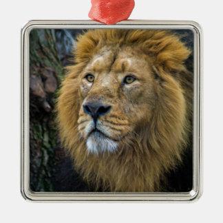 威厳のあるなライオン メタルオーナメント