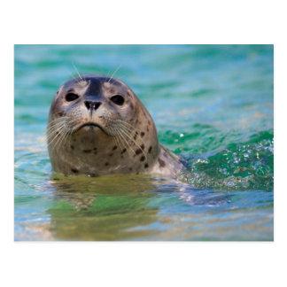 子どものアシカによって水泳 ポストカード