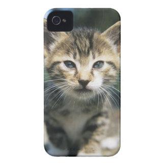子ネコのアウトドア Case-Mate iPhone 4 ケース