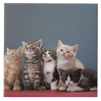子ネコのグループのポートレート タイル