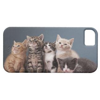 子ネコのグループのポートレート iPhone SE/5/5s ケース
