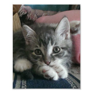 子ネコのヨガ フォトプリント