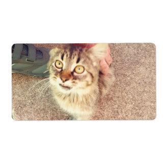 子ネコの写真が付いている出荷ラベル ラベル