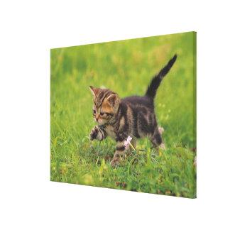 子ネコの探検の芝生 キャンバスプリント