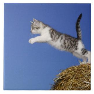 子ネコは2つを跳んでいる タイル
