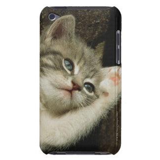 子ネコは、大きい青い目とそれに、あります置きます Case-Mate iPod TOUCH ケース