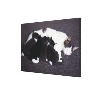 子ネコを食べ物を与えている猫 キャンバスプリント