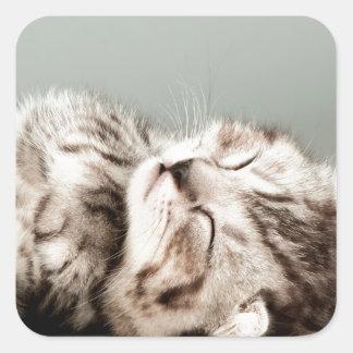 子ネコ、猫、かわいい虎猫猫、かわいい猫、かわいいkitte スクエアシール