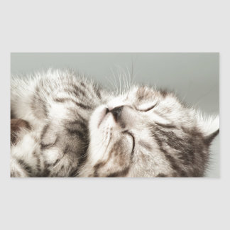 子ネコ、猫、かわいい虎猫猫、かわいい猫、かわいいkitte 長方形シール