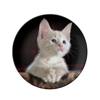 子ネコ: 魅惑的な時の~ 磁器プレート