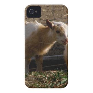 子供のヤギ Case-Mate iPhone 4 ケース