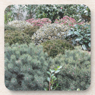 子供部屋植物の選択を用いる園芸用品センター コースター