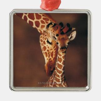 子牛(Giraffaのcamelopardalis)を持つ大人のキリン シルバーカラー正方形オーナメント