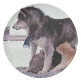 子犬のくずが付いているハスキー プレート