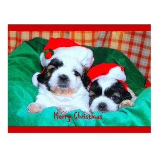 子犬のクリスマスカード(シーズー(犬)tzu's) ポストカード