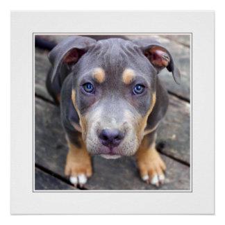 子犬のゼウス-母の日 ポスター