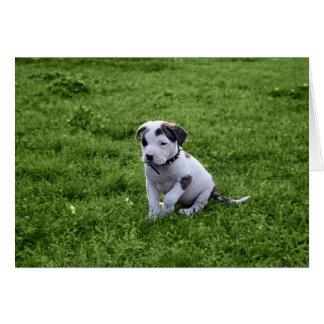子犬のピット・ブルのT骨 カード