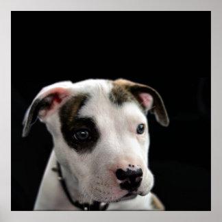 子犬のピット・ブルのT骨 ポスター