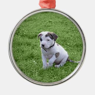 子犬のピット・ブルのT骨 メタルオーナメント