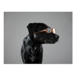 子犬の身に着けているガラス ポストカード