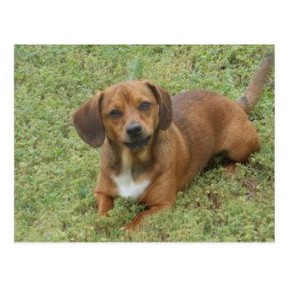 子犬座のdashhundの組合せ ポストカード