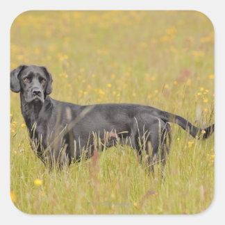 子犬16か月 スクエアシール