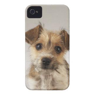 子犬(イヌ属のfamiliaris) Case-Mate iPhone 4 ケース