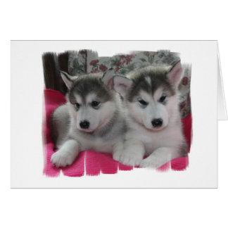 子犬 カード