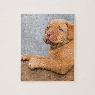 子犬 ジグソーパズル