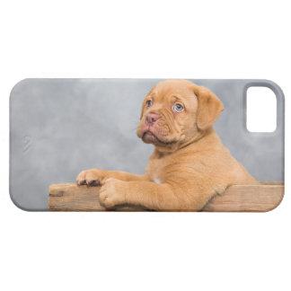 子犬 iPhone SE/5/5s ケース