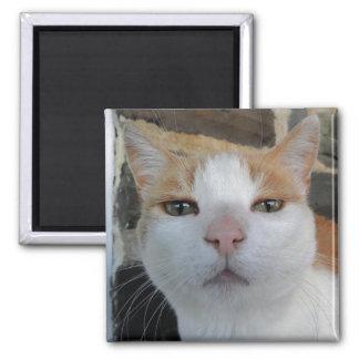 子猫のヘッド打撃の磁石 マグネット