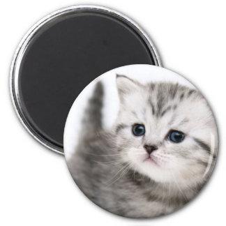 子猫の時間 マグネット