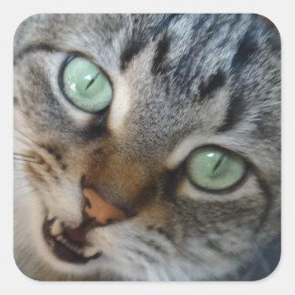 子猫の話 スクエアシール