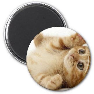 子猫猫のかわいい項目 マグネット