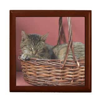 子猫猫のギフト用の箱 ギフトボックス