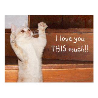 子猫猫愛 ポストカード