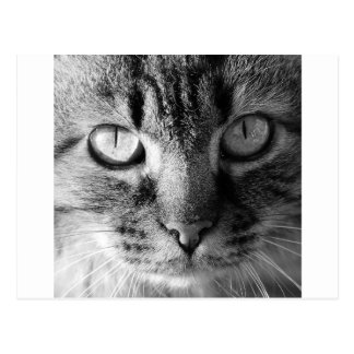 子猫猫 ポストカード