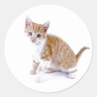 子猫猫 ラウンドシール