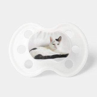 子猫猫、白いおよび黒猫のリラックス おしゃぶり